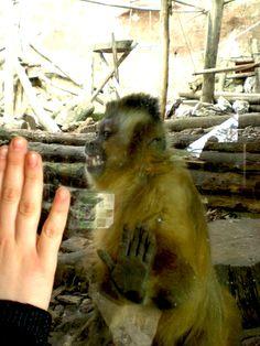 che tenerezza, sembra umana, piccola scimmietta. Animals, monkey. #monkeys