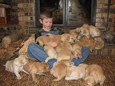 puppies, puppies everywhere!!!