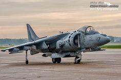 Harrier   Flickr - Photo Sharing!