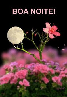 full moon in lil flowers Good Night Messages, Good Night Quotes, Night Qoutes, Nature Pictures, Beautiful Pictures, Good Night Flowers, Story Instagram, Good Night Image, Beautiful Moon