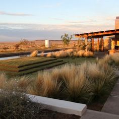 Drought-tolerant landscapes can be more than just cactus and rock gardens. Through sustainable principles, these stunning gardens offer a contemporary and innovative take on water-wise landscapes, offering well-designed, alternative takes on lawn and turf.