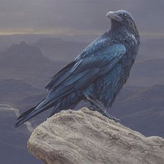 Canyon Vista Raven perched on rock by wildlife artist Daniel Smith Crow Art, Raven Art, Bird Art, Rabe Tattoo, Raven And Wolf, Jackdaw, Crows Ravens, All Birds, Foto Art