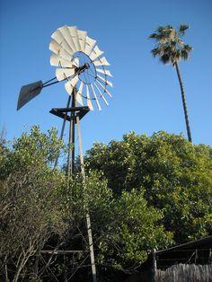 Windmill & Palm Tree. Ivanhoe, Tulare County, California. DSMc.2012