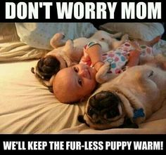 Funny dogs. lol the baby is the fur-less puppy. <3