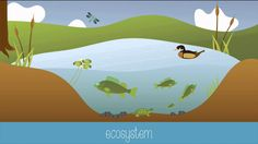 Intro to ecology Learn about the biosphere, ecosystems, communities, populations, organisms, habitats, niches, generalists, specialists, biotic and abiotic factors in this vi...