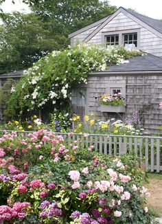 There is nothing quite like the beauty of Nantucket gardens. You haven't seen roses until you've seen Nantucket roses. Dream Garden, Home And Garden, Yard Design, Cottage Style, Nantucket Cottage, Nantucket Island, Nantucket Style, Rose Cottage, Garden Spaces