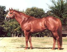 american quarter horse stallions | This son of First Down Dash exemplifies the classic qualities of his ...