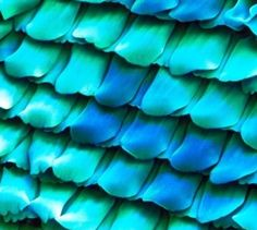 Butterfly wings under a microscope