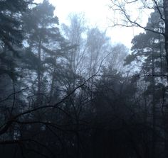 Walking through the misty forest