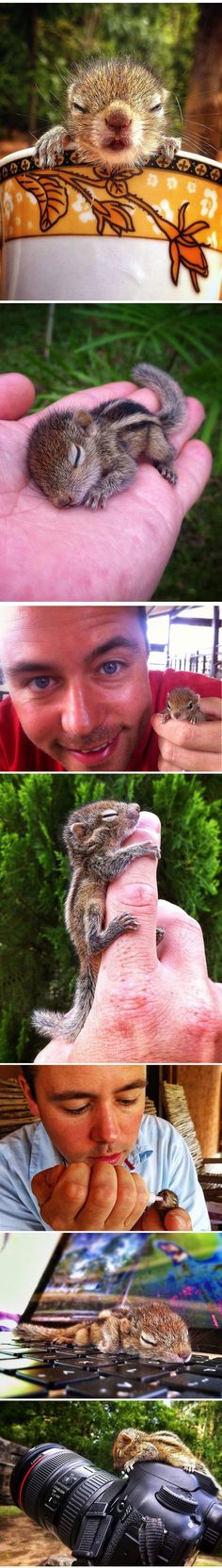 Cute baby squirrel rescued by BBC filmmaker