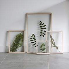 Flowers, Plants, Projects, Tropical Rain Forest, Glass Display Case, Catalog, Log Projects, Florals, Plant