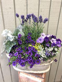 Purple Container Flowers Annual Plants Purple container flowers & lila b Container Flowers, Flower Planters, Container Plants, Garden Planters, Flower Pots, Flower Ideas, Garden Types, Fleurs Toussaint, Purple Perennials