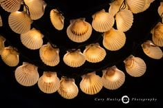 Recycled Nantucket Bay Scallop shells – DIY holiday light project