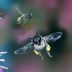 Save Honey Bee's
