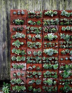succulent_brick_wall