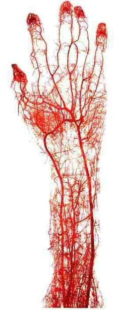 blood vessels of the hand