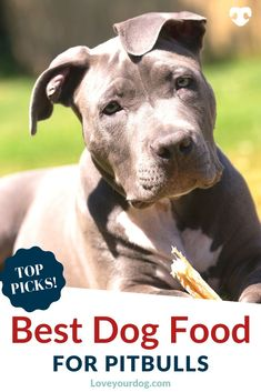 Looking for the right dog food for your pitbull puppy, adult or senior? We look at the best foods for your American Pitbull Terrier! Dog Training Techniques, Dog Training Tips, Best Dog Food, Best Dogs, R Dogs, Dogs And Puppies, All Types Of Dogs, Dog Day Afternoon, Grain Free Dog Food