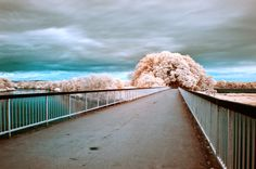 In part two of our infrared tutorial, you'll learn how to process those red eerie images into spectacular false color Infrared photographs to be proud of. Using Photoshop and Lightroom, you will...