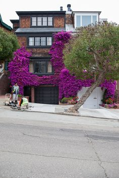 Bougainvillea taking over, in a very flowery way, the house.