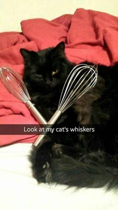 Funny Animal Pics Of The Day – Wackyy Picdump 12 This is hilarious! Hahaha 15 Puurfect Cat Puns That Are Im-Pawsable Not To Laugh At Crazy Cat Lady, Crazy Cats, Dumb Cats, Hate Cats, Funny Kitties, Adorable Kittens, Animal Memes, Funny Animals, Cute Animals
