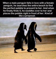 Aww... Penguins