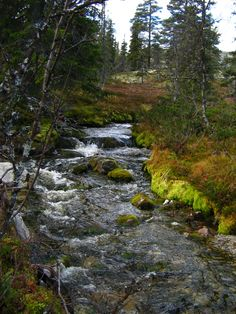 A nice walk in the forest at Tryvang with only the sound of birds and running water. Sounds Of Birds, Enchanted, Norway, Waterfalls, Nature, Pictures, Photography, Travel, Outdoor