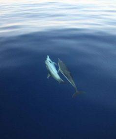 Studiare cetacei e tartarughe marine nello Stretto di Messina