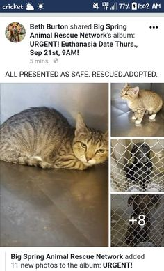 "Update. Now please go to the board ""URGENT! SHELTER ANIMALS IN NEED II."