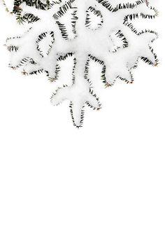 balsam with fresh snow (mary jo hoffman)