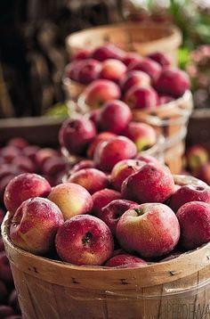 autumn harvest - bushels of apples - Apple Apple Harvest, Bountiful Harvest, Harvest Time, Fall Harvest, Apple Farm, Apple Orchard, Apple Tree, Red Apple, Apple Season
