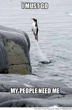 35 Very Funny Animal Pictures 35 sehr lustige Tierbilder Tiere Katzen Animals Funny Animal Memes, Cute Funny Animals, Funny Animal Pictures, Animal Humor, Funny Photos, Hilarious Pictures, Animal Pics, Funny Dog Memes, Sports Pictures