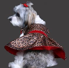 Animal prints for dogs!