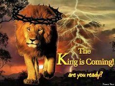 Bildergebnis für the lion of judah is coming images