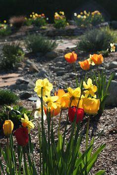my beautiful spring blooms