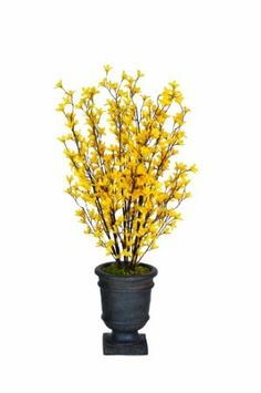 like yellow confetti announcing the season spring forsythia nozin is everywhere you are for spring pinterest gardens spring and flowering - Forsythia Arrangements