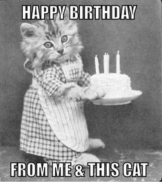 Funny cat birthday card image - Happy Birthday Funny - Funny Birthday meme - - Funny cat birthday card image More The post Funny cat birthday card image appeared first on Gag Dad. Happy Birthday Funny, Happy Birthday Quotes, Cat Birthday, Happy Birthday Images, Birthday Pictures, Happy Birthday Wishes, Birthday Greetings, Birthday Cards, Birthday Messages