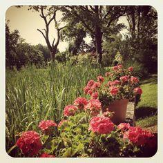 Parents Garden