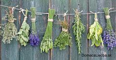 Liečivé bylinky na 64 rôznych ochorení (kompletný zoznam)