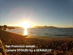 GoPro STOLEN by a SEAGULL!! - Unique San Francisco sunset...