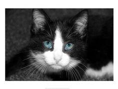 Curiosity+Teased+the+Cat+at+FramedArt.com