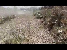 07/30/2015 - Plagues of Locusts Darken Skies, Threaten Crops in Southern Russia - ABC News