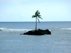 Lonely Little Tree- American Samoa TRAVEL AMERICAN SAMOA BY  MultiCityWorldTravel.Com Search Engine For Hotels-Flights Bookings Globally Save Up To 80% On Travel Cost Easily find the best price and availabilty from all ...