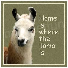 HOME IS WHERE LLAMA IS New Picture Refrigerator Magnet