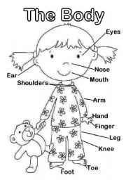 English worksheet: The Body