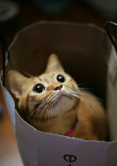 Theo used to love surprising me in a brown paper bag!  I would be putting away groceries, and I'd look down, and there he would be...