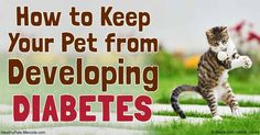 According to pet insurance Animal Friends, there has been an astonishing 900 percent increase in diabetes in pets in the U.K. in just the last 5 years. http://healthypets.mercola.com/sites/healthypets/archive/2016/10/08/diabetes-in-pets.aspx