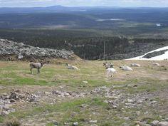 Levi fjeld, Kittilä Finland, Mountains, Places, Nature, Travel, Naturaleza, Viajes, Destinations, Traveling