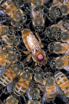During the summer months, queen bees can lay up to 2,500 eggs per day. | 11 Things You Should Know Right Now About Honey Bees