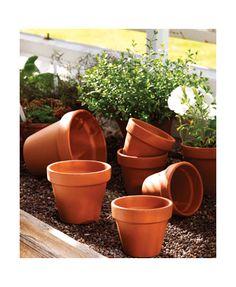Standard Terracotta Pot