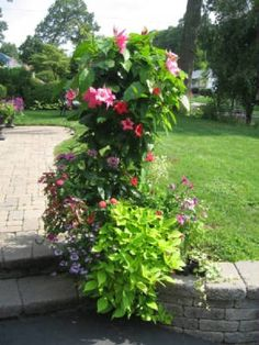 Great site for container garden inspiration